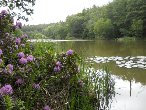 Birchenbridge Pond