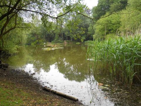 Sun Oak Farm Ponds