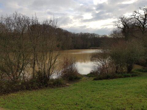Bury St Austens (BSA) lakes