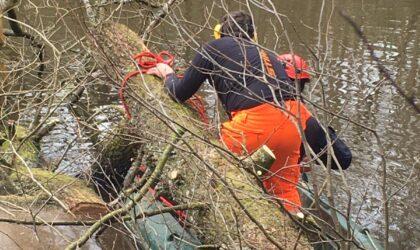 Island Pond tree removal