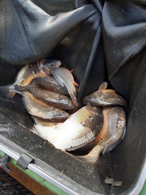 Fish stocked at BSA